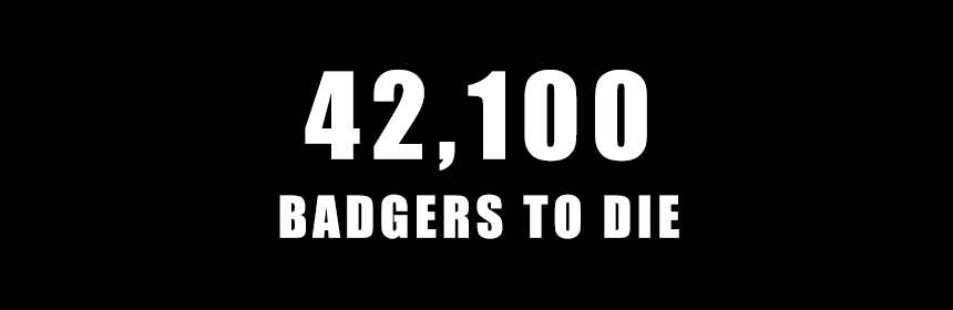 42,100 badgers to die