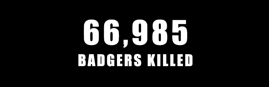 66985 badgers killed